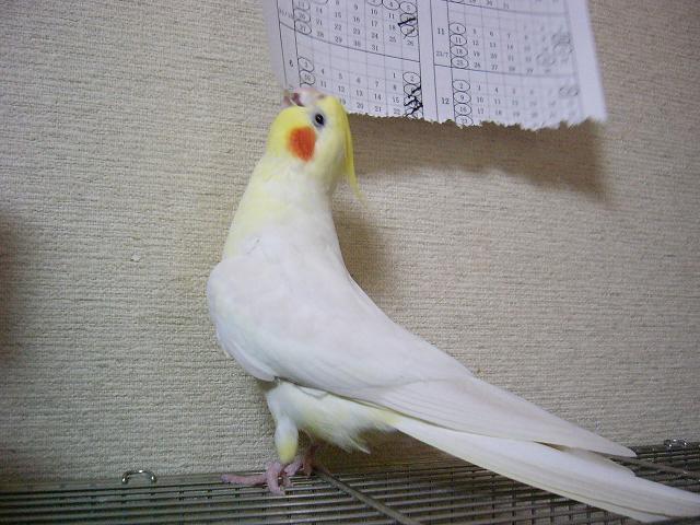 P1090037_2